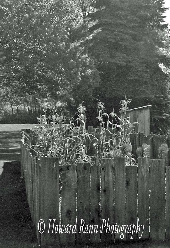 Black & White Slide (207)