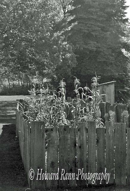 Black & White Slides (207)