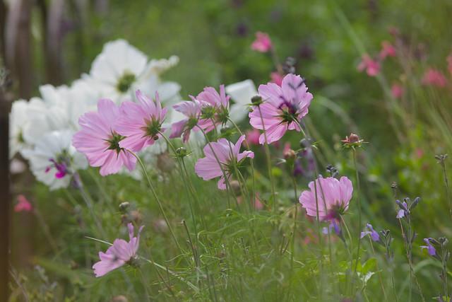 Pinks Whites &Greens