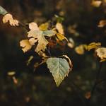 Simply leaves #2