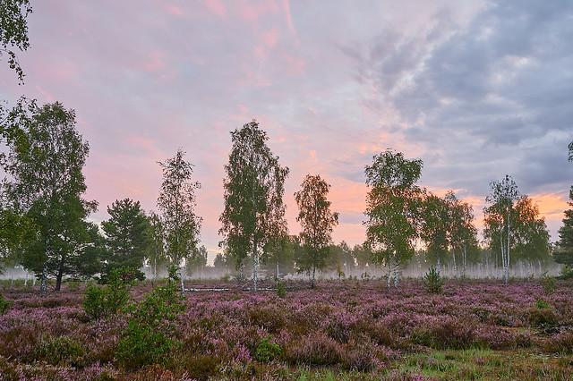 Birch trees and heathland (Explored Sept 20, 2020)