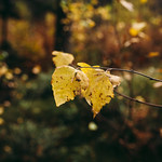 Simply leaves #4