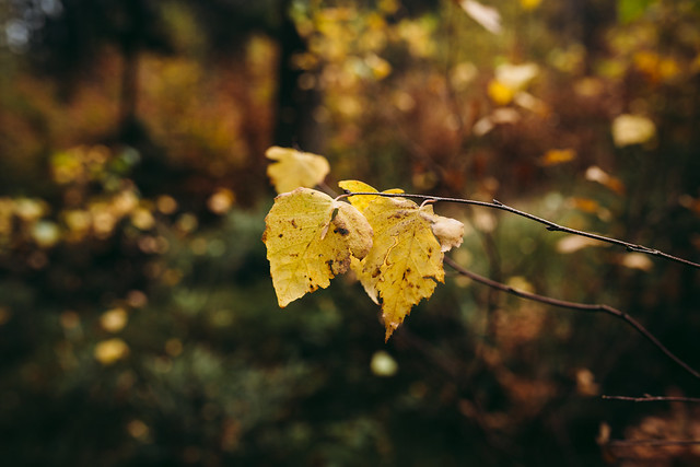 Simply leaves #4