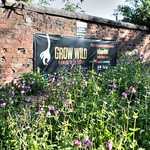 Grow Wild mini meadow in Preston
