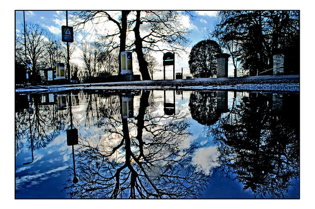 REFLECTED STREET FURNITURE & TREES