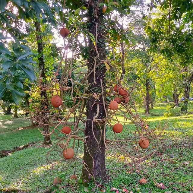 Tree with balls