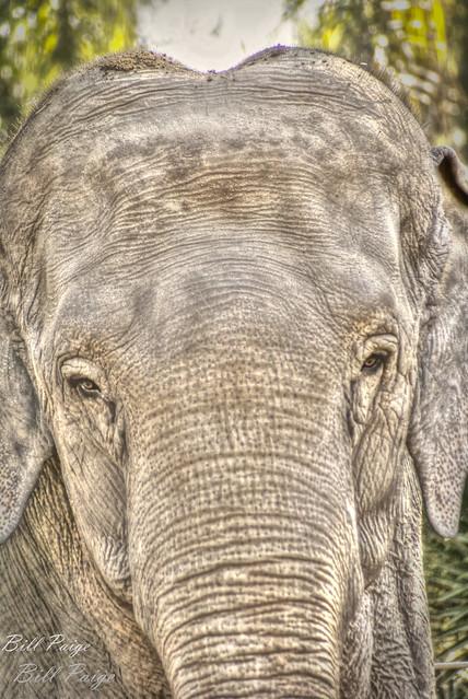 Elephant Eyes (EXP)