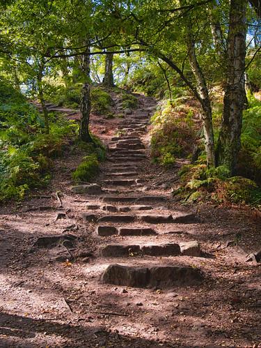 landscape woods luminar3 cheshire