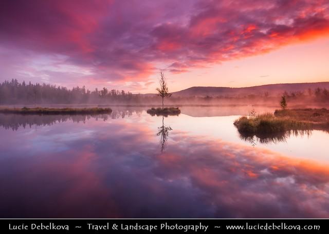 Czech Republic - Šumava National Park - Chalupska Slat / Moor at Sunrise