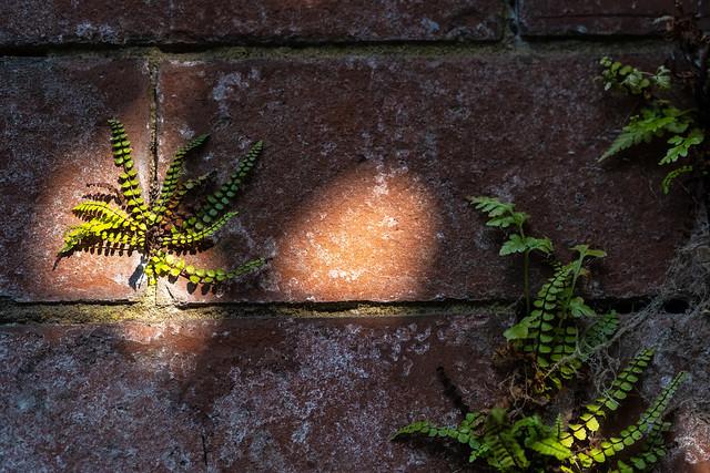 Urban nature KX