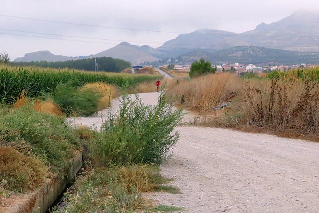 El corredor solitario