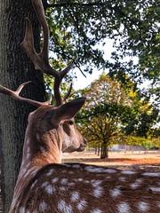 Mr. Bambi.