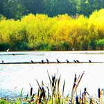 20. September 2020 - 4:37 - Bald ist es vorbei mit der Sommerzeit. Dir Vögel versammeln sich langsam um wieder zu entfliehen, sich wieder auf den Weg zu machen Richtung Süden. Dennoch kann man nach wie vor den blick auf die Schönheit und Vielfalt der Natur-und Tierwelt richten, die sich stetig weiterentwickelt um uns zu inspirieren. Allein durch diesen kleine Faszinationen können wir unser Hobby ausführen, alleine dadurch wird die Welt etwas bunter. Die Natur ist ein Buch, welches sich die Geschichte selber schreibt. Und jeden Tag entsteht eine neue und einzigartige Welt, die sich in jedem Moment, jedem Augenblick weiterentwickelt.