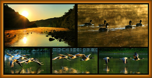 early morning flight fly geese canadageese sunrise takeoff londonontario darrellcolby interesting