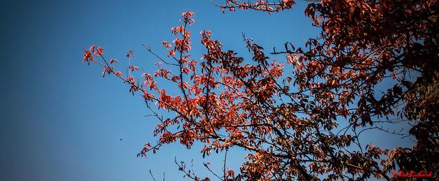 Autumn (214-3623)