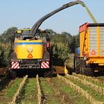 Maize   Harvesting   2020