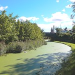 Greenish canal at Preston
