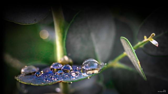 «Planète bleue sous oxygène»