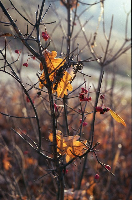 From Last Autumn