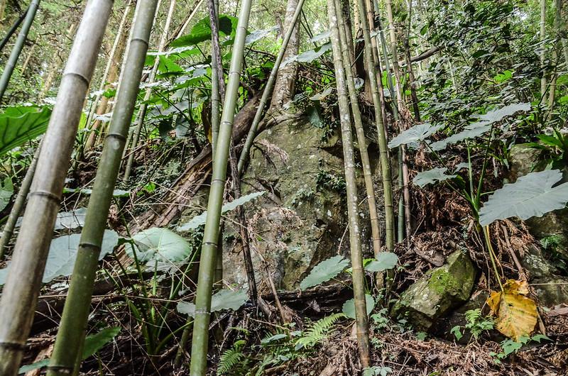 馬那邦山南峰竹林巨石峭壁處