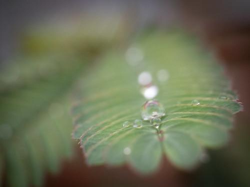 P9200014 Llegan las lluvias