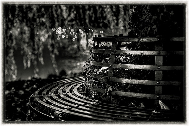 Woodland tree bench