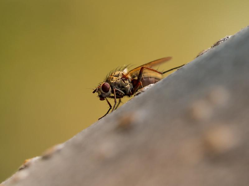 Fly on an aspen tree