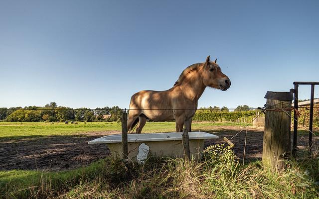 Paard en bad