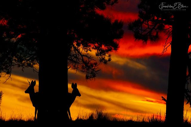 Deer Hide and Seek