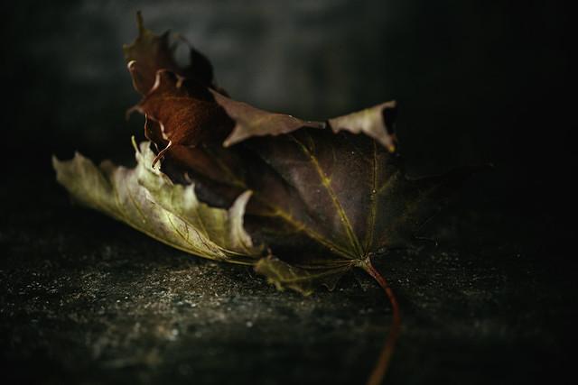 Autumn Riches...