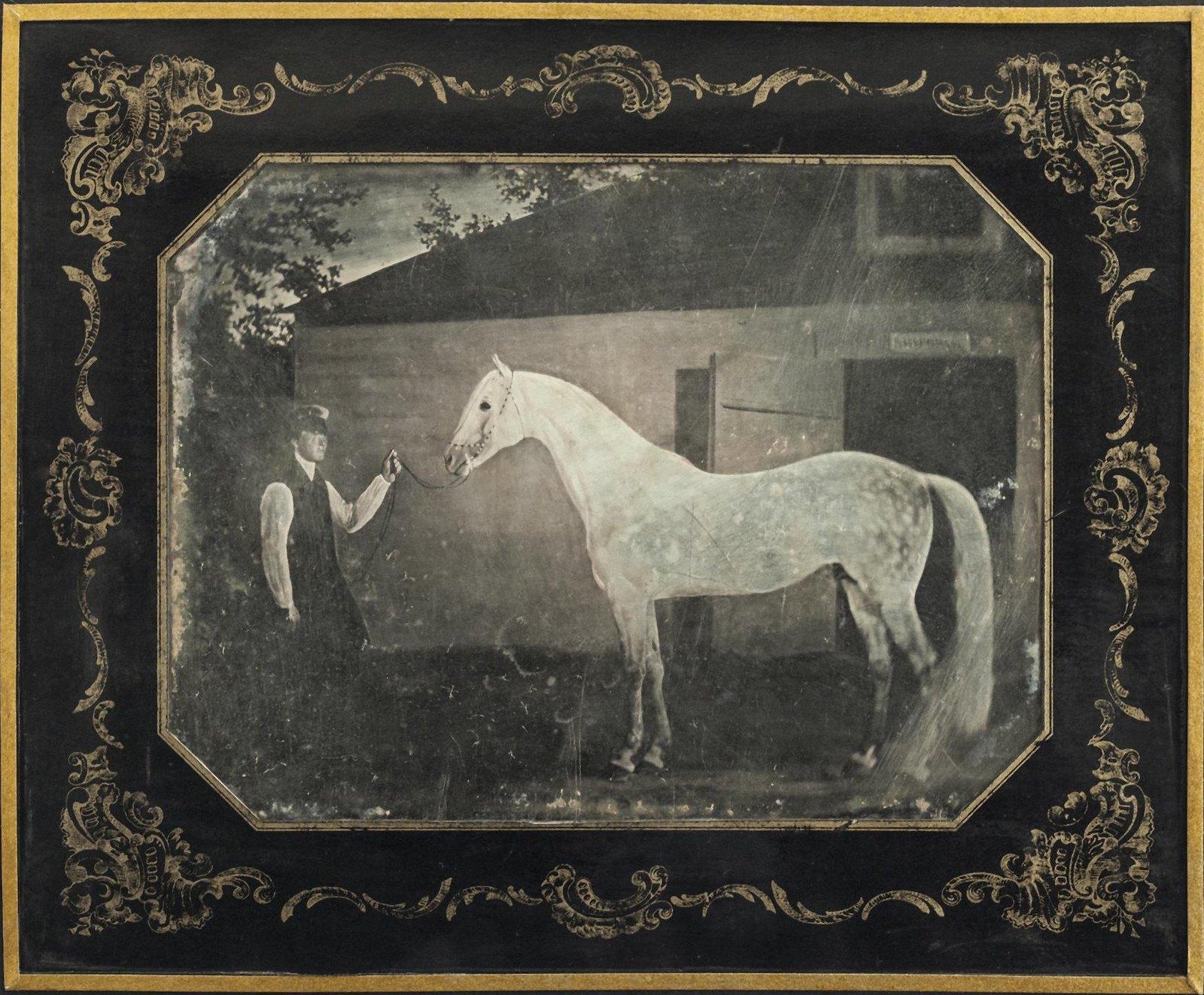 1850-е. Рысак по кличке Лебедь