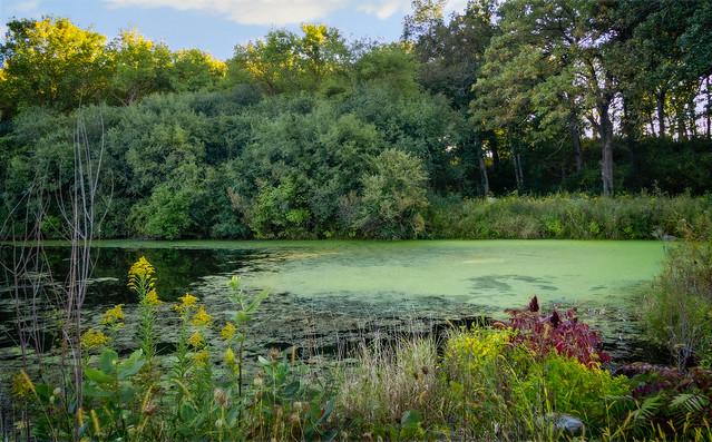 Enchanted lake
