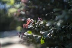 Rokinon/Samyang 50mm f/1.4