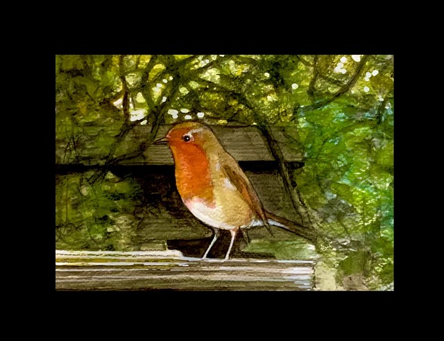 Pencil and Watercolour of Robin in the garden today, by jmsw.