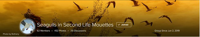 Thank you so much - Seagulls in Second Life Mouettes
