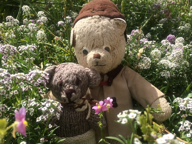 Paddington and Scout Stop to Smell the Flowers