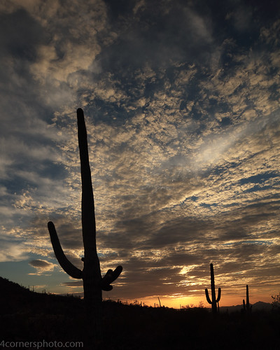 4cornersphoto arizona cactus carnegieagigantea clouds desert dusk landscape monsoon mountains nature northamerica outdoor pimacounty rural saguaro saguaronationalpark scenery sonorandesert summer sun sunset tucsonmountains unitedstates weather tucson