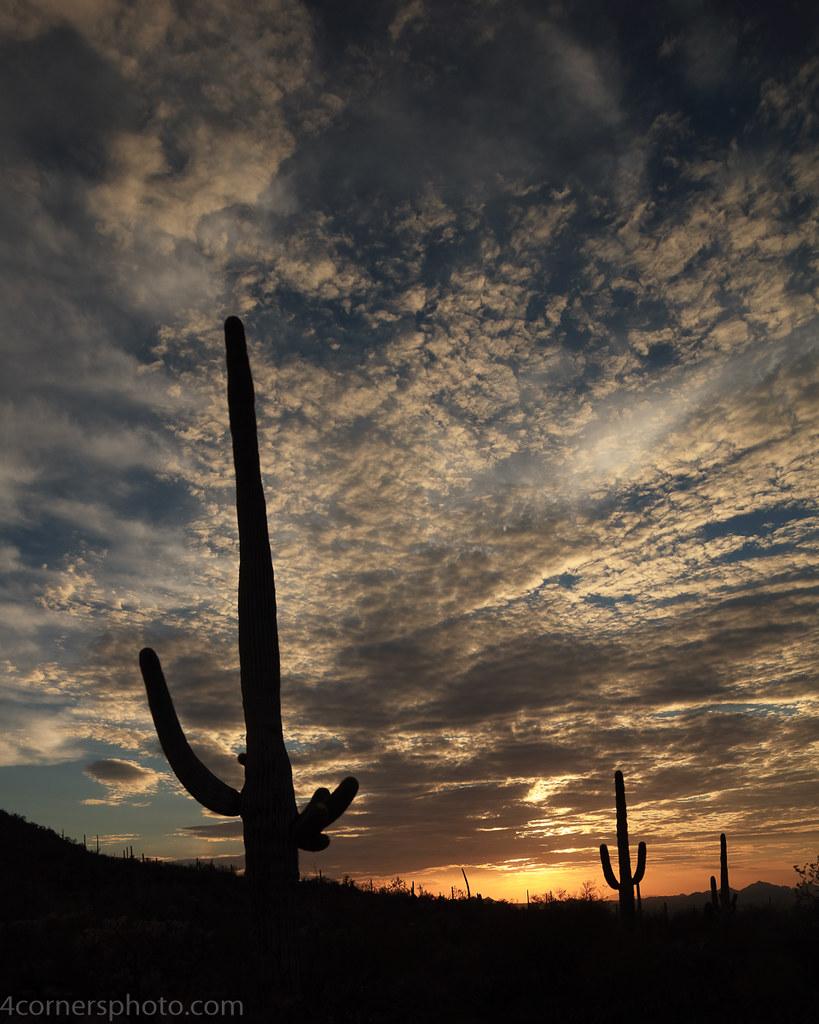 Sunset and Saguaro Cactus, Pima County, AZ
