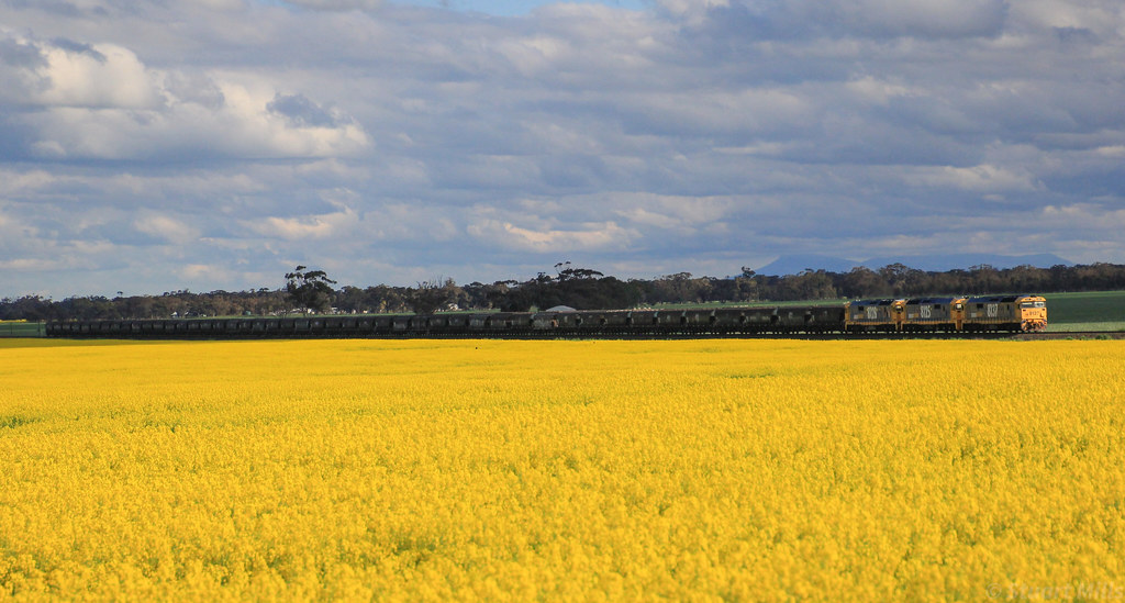 8137 8125 and 8128 ease GK6 empty grain on the approach to Murtoa for stabling by bukk05