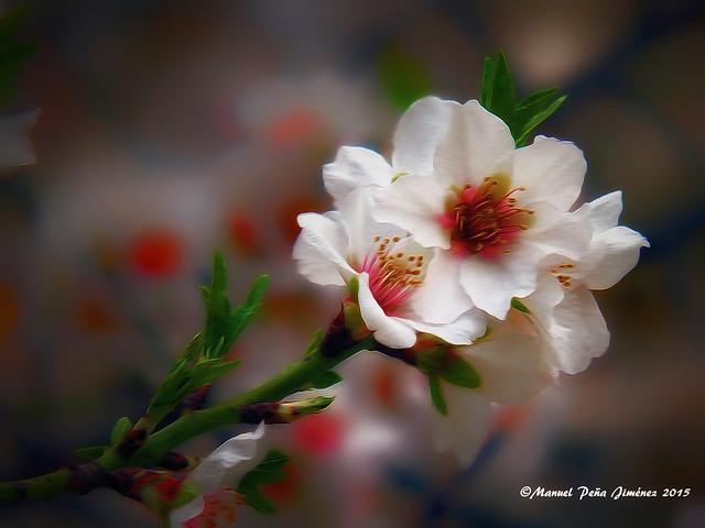 Anhelo de primavera. Longing for spring.