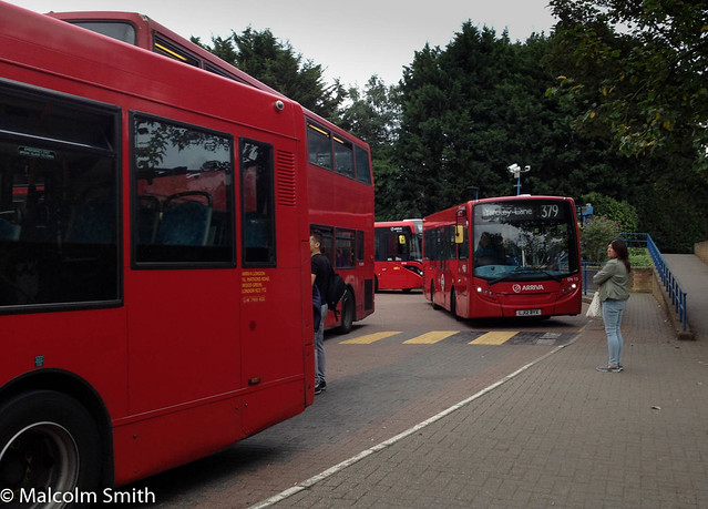 Lots Of Buses