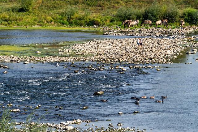 Doorwaadbare Maas in Uikhoven