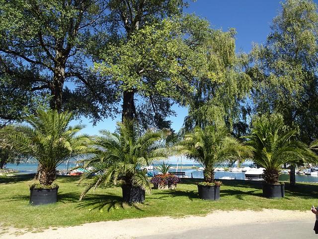 Palmen, Wasser, Sonne, fast wie im fernen Süden im September 2020 am Neuenburgersee
