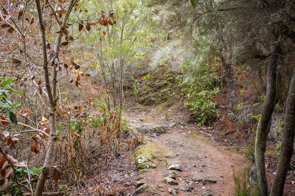 Bosque de laurisilva en el Monte del Agua