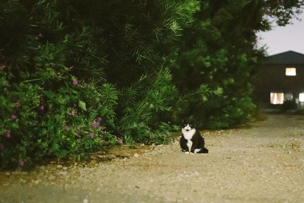 猫 2020/09/21 IMG_3406