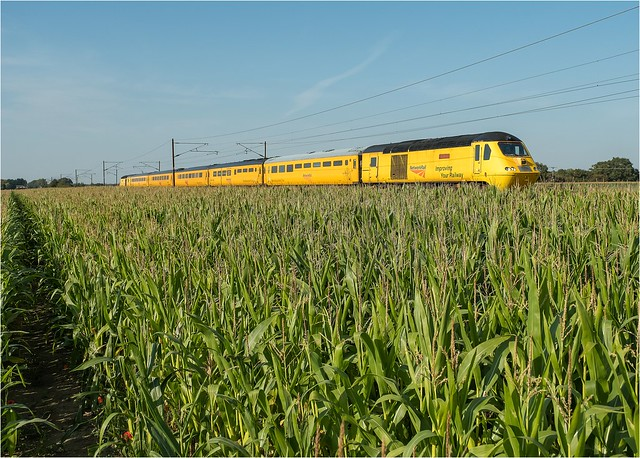 43062 + 43014. A banana in a field of maize?