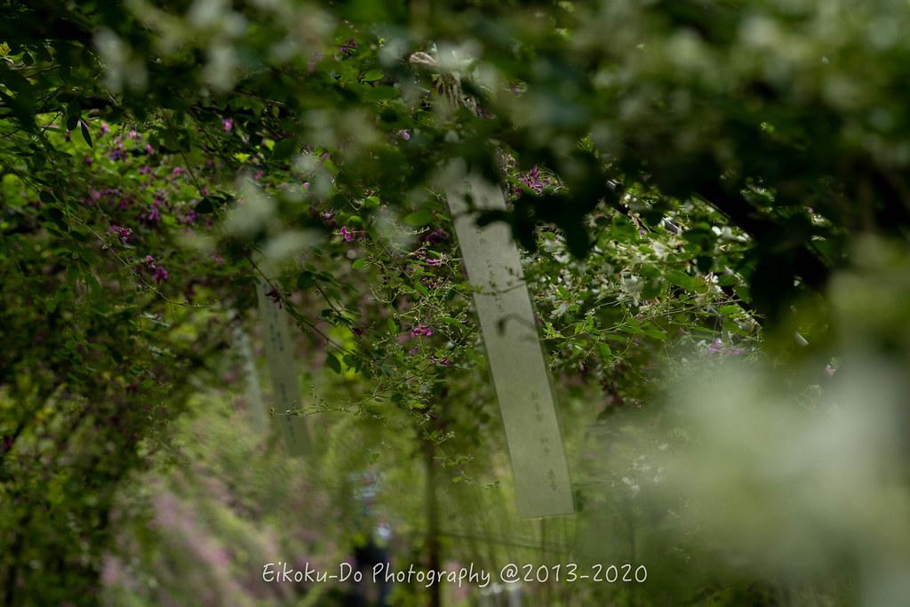 EKD_0854