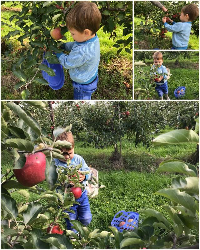 De zelfplukboerderij – een leuke uitstap met een kleuter! – collage 1