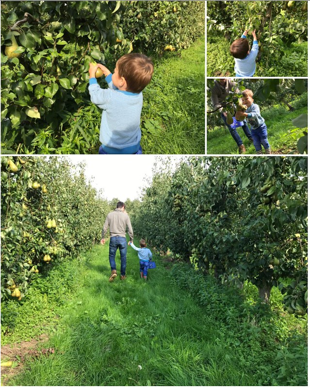 De zelfplukboerderij – een leuke uitstap met een kleuter! – collage 2