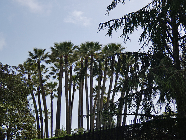 palmiers et palmiers
